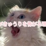 猫がきゅうりを見てビックリ!?きゅうりに驚く理由を紹介!