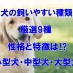 犬の飼いやすい種類 厳選9種 性格と特徴は⁉小型犬・中型犬・大型犬