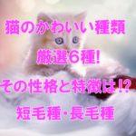 猫のかわいい種類 厳選6種!性格と特徴は⁉短毛種・長毛種