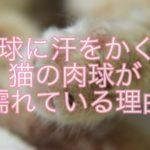 猫は肉球に汗をかく?肉球が濡れている理由を紹介!