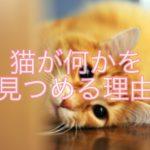 猫が何かをじっと見つめる?猫が見つめる理由を紹介!