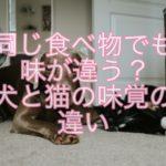 同じ食べ物でも味が違う?犬と猫の味覚の違いを紹介!